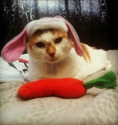 Halloween for pets: Cat in a rabbit costume