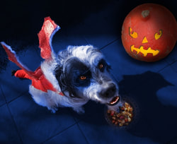 Halloween for pets: There are costumes they will wear and those they won't. Don't press the issue go with their choice